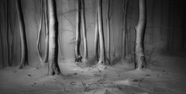 ILPOTY 2019: Wald in der Zentralen Balkanregion
