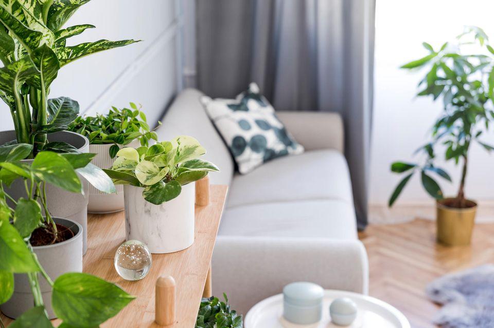 Exotische Zimmerpflanzen: Lust auf Monstera & Co.: Verschiedene Pflanzen