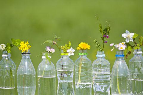 PET-Recycling: Zu schön, um wahr zu sein?: Blumen in PET-Flaschen