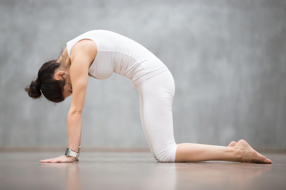 Hatha Yoga: Katze