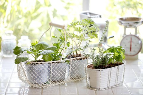 Indoor Garden & Smart Garden: Küchenkräuter
