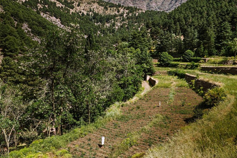 Ecosia: Per Klick ein neuer Baum: Baumschule