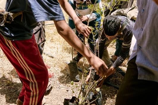Ecosia: A new tree with a click: dry soil of Morocco