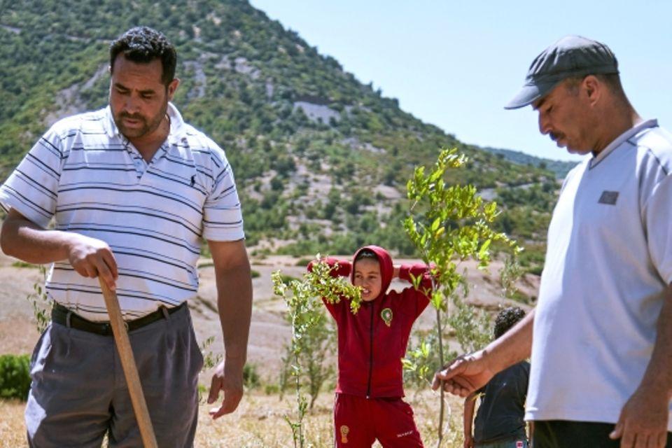 Ecosia: Per Klick ein neuer Baum: Baumpflanzung in Marokko