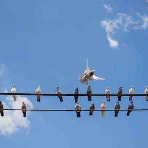 Vögel auf Telefondraht