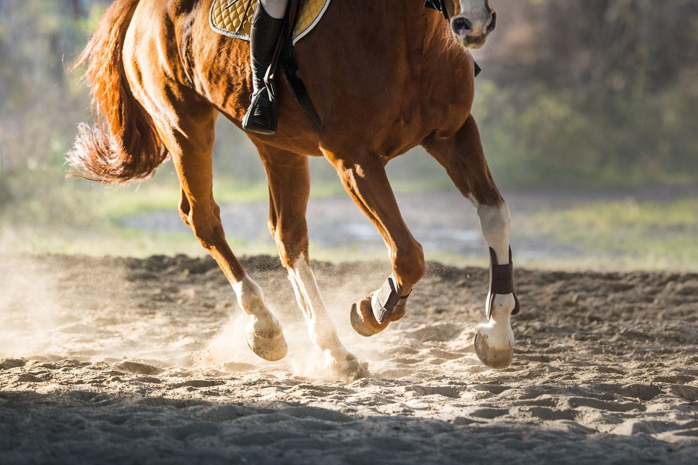 Beine eines Pferdes beim Galopp