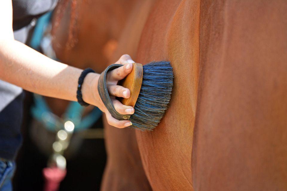 Striegeln eines Pferdes