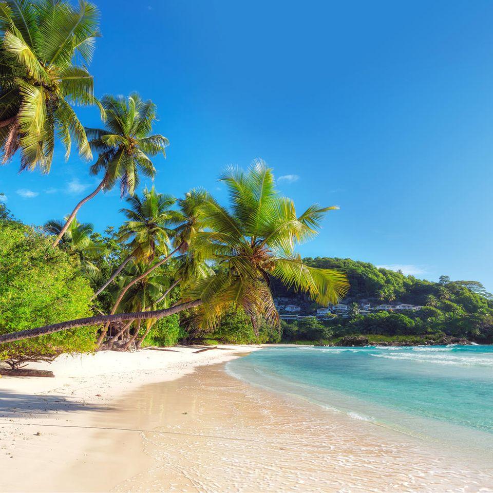 Strand und Palmen auf den Seychellen