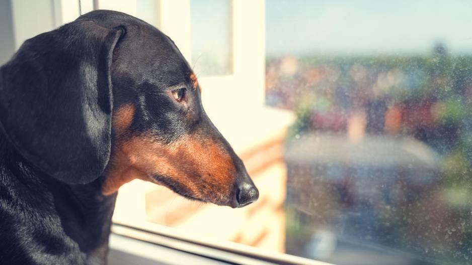 Christina Hammock Koch: So sehr freut sich ihr Hund über ihre Rückkehr