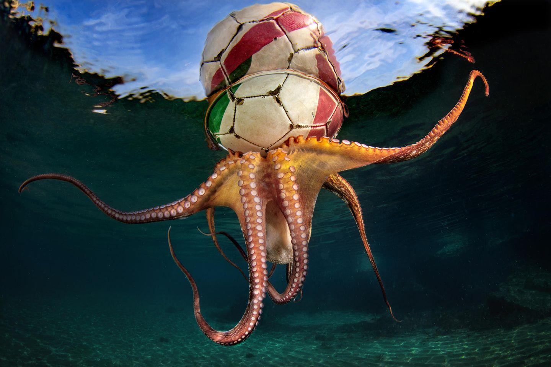Unterwasserbilder 2020: Oktopus mit Fußball