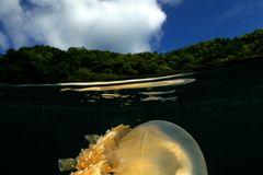 Unterwasserbilder 2020: Qualle