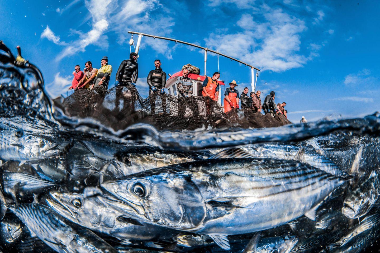 Unterwasserbilder 2020: Fischer fischen Fische