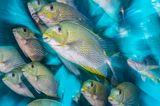 Unterwasserbilder 2020: Fischschwarm