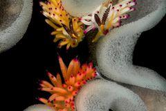 Unterwasserbilder 2020: Fadenschnecken