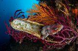 Unterwasserbilder 2020: Katzenhai schlüpft