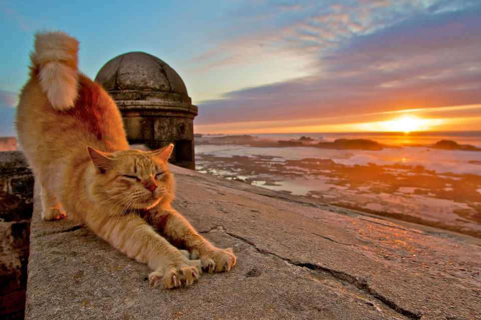 Katze streckt sich am Meer