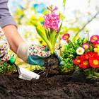Gartenarbeit: Blumenbeet anlegen