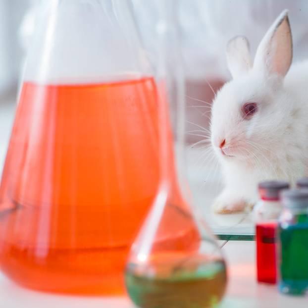Tierversuchsfreie Kosmetik: Hase im Labor