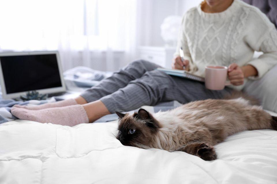 Was tun bei Quarantäne? Eine Frau sitzt mit ihrer Katze auf dem Bett