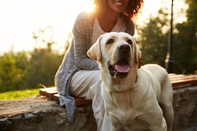 Coronavirus: Das sollten Haustierbesitzer jetzt wissen