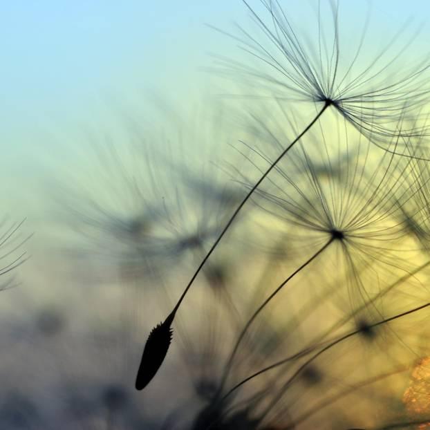 Heuschnupfen: Pollen