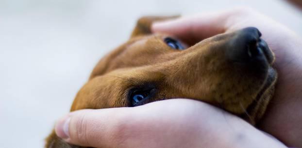Hund schaut seinen Besitzer in Coronakrise besorgt an