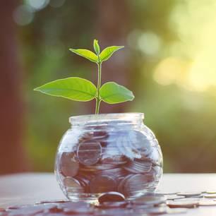 Nachhaltige Geldanlage: Pflanze wächst aus Geldglas
