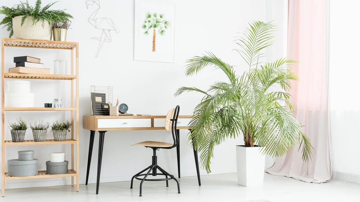 Arbeitszimmer einrichten: Tipps und Ideen fürs Homeoffice