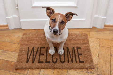 Hund allein lassen: Kleiner Hund sitzt auf Fußabtreter vor der Tür