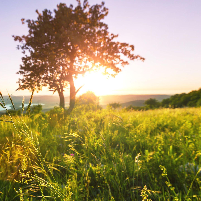 Wird die Sonne diesen Sommer unentwegt strahlen? Wir sagen mal: Ja! Das hat uns die Pressestelle des Wettergottes im persönlichen Gespräch bestätigt. Ehrlich.
