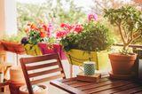 Im Winter sträflich vernachlässigt und Heimat von ausgelagerten Bierkisten, Wasserflaschen und anderen Utensilien, blüht unser Balkon im Sommer wieder richtig auf. Und wir buddeln mit unseren Nachbarn um die Wette, pflanzen Lavendel, wässern Buchsbäume und Margeriten-Sträucher, stellen Windlichter auf - und genießen nach getaner Arbeit unseren neuen Lieblingsplatz bei einer kühlen Weinschorle. Tipps finden Sie auch in unserer Dekoration für Garten und Balkon.