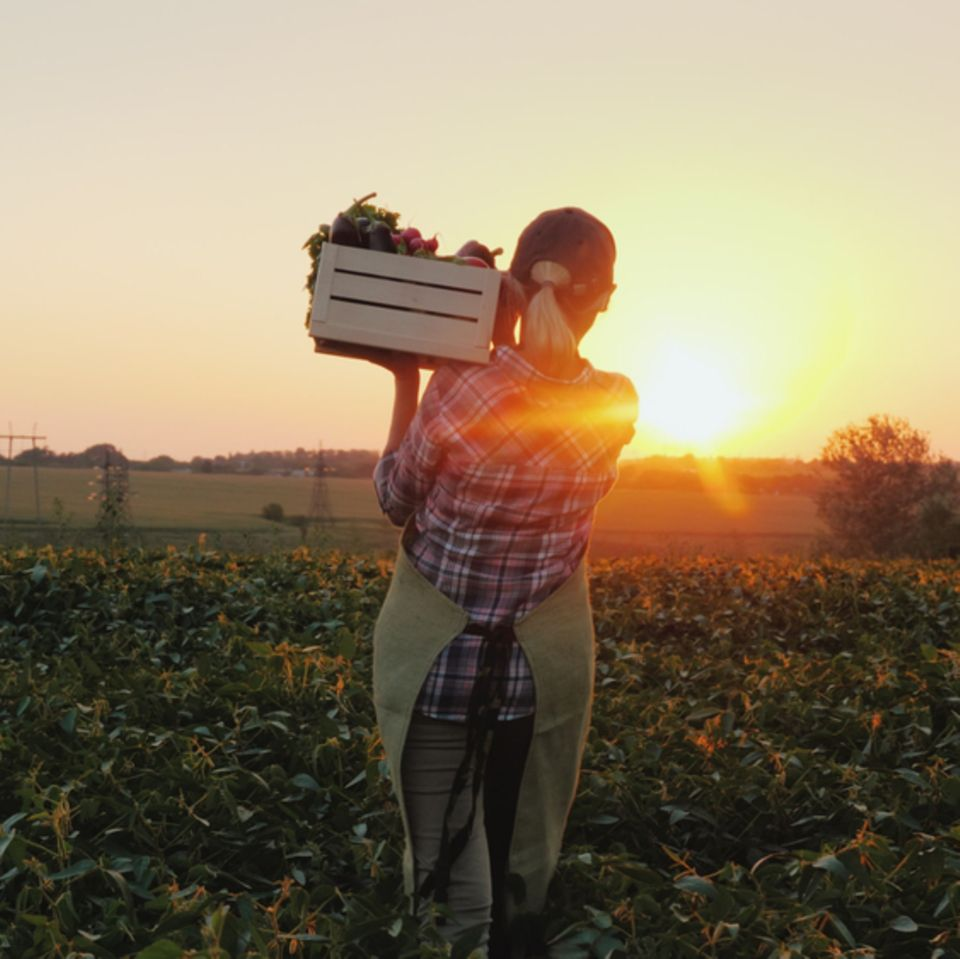 Selbstversorgung: Frau mit Obstkiste auf dem Feld