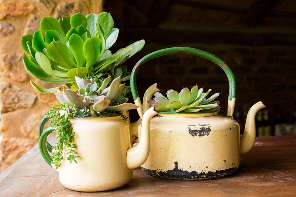 Selbstversorgung: Alte Teekannen als Blumentopf