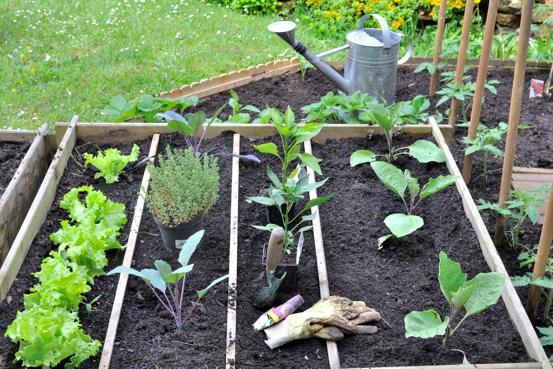 Auf Vordermann bringen: Gartenbeet schön gemacht