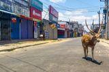 Corona-Krise: Hirsch auf der Strasse
