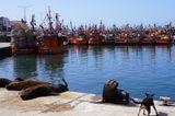 Corona-Krise: Seelöwen am Hafenbecken