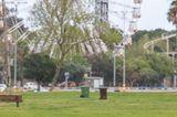 Corona-Krise: Schakal im Park
