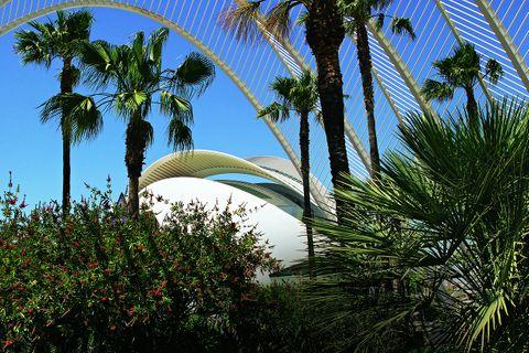 Valencia - Sehenswürdigkeiten und Tipps: Oper hinter Palmen