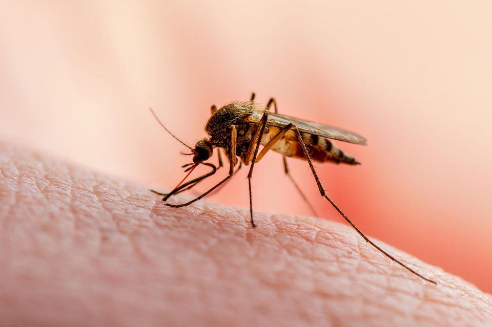 Corona aktuell: Mücke sitzt auf Haut