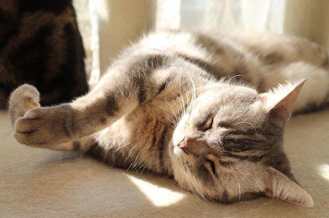 Alles für die Katz: Katze liegt auf Boden