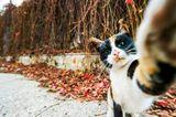 Haustier Fotowettbewerb: Katze macht Selfie