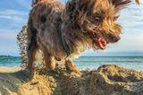 Haustier Fotowettbewerb: Hund am Strand
