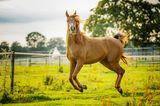 Haustier Fotowettbewerb: Pferd springt
