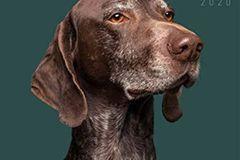 Hundekalender Freischnauze