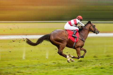 Aus dem Stegreif: Reiter auf Pferd