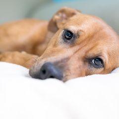 Trauriger Hund findet überraschenden Tröster