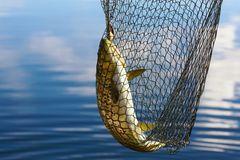 Nachhaltige Fischerei: Fisch im Netz