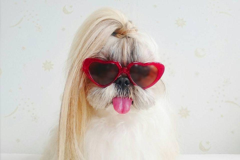 Dieser Hund hat die schönsten Haare auf Instagram