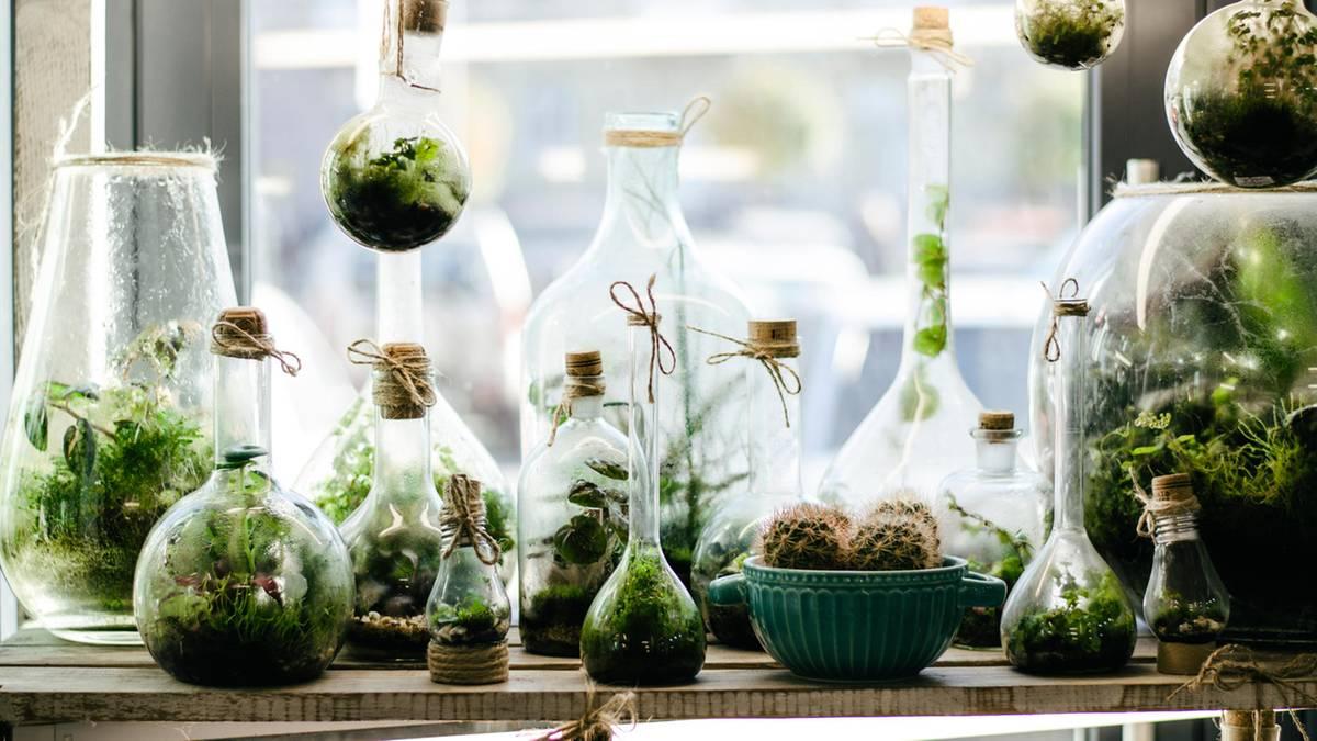 Flaschengarten: So legst du dir ein ewiges Terrarium an