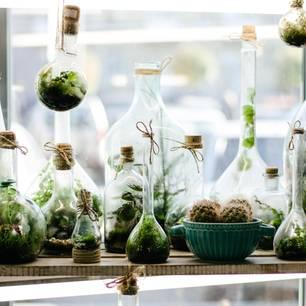Flaschengarten: Fensterbank mit Flaschengärten